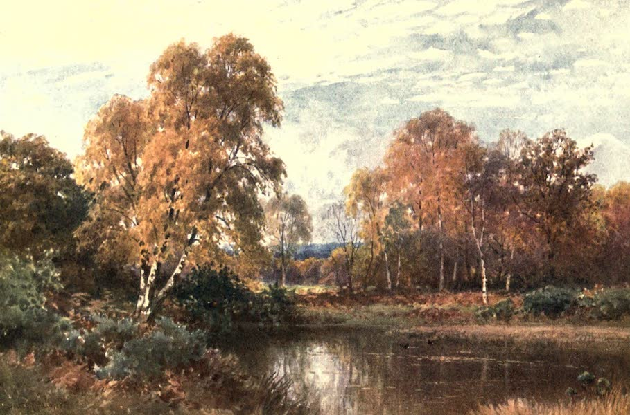 Surrey Painted and Described - The Waning Year (1906)
