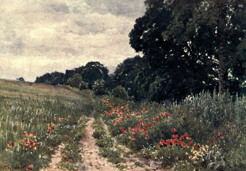 Surrey Painted and Described - Poppies (1906)