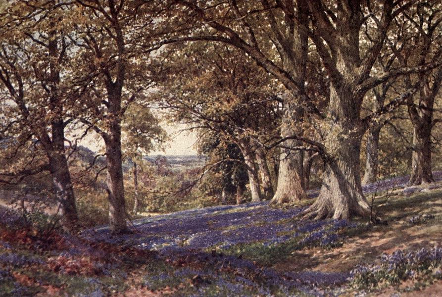 Surrey Painted and Described - Groombridge (1922)