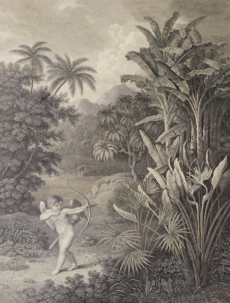 Temple of Flora - Cupid Inspiring Plants with Love (1812)