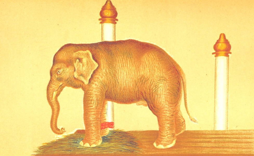 Temples and Elephants - The White Elephant (1884)
