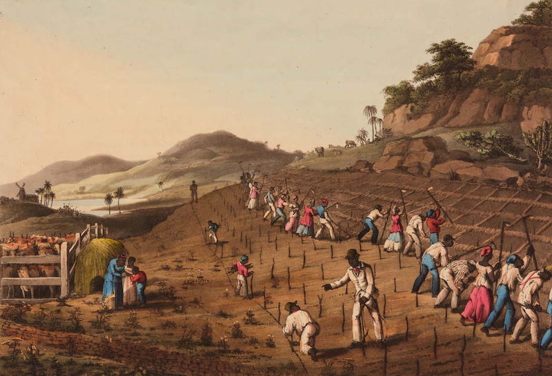 Ten Views in the Island of Antigua - Holeing a Cane-Piece on Weatherell's Estate, Antigua (1823)
