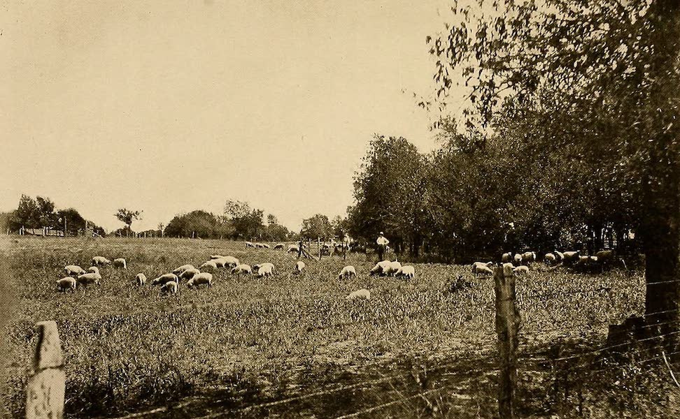 Texas, the Marvellous, the State of the Six Flags - A Grazing Scene (1916)