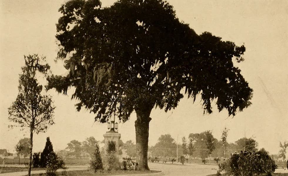 Texas, the Marvellous, the State of the Six Flags - Live Oak Tree in One of Houston's New Parks (1916)
