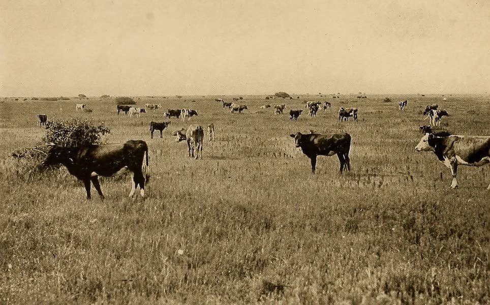 Texas, the Marvellous, the State of the Six Flags - Typical View on a Texas Ranch (1916)