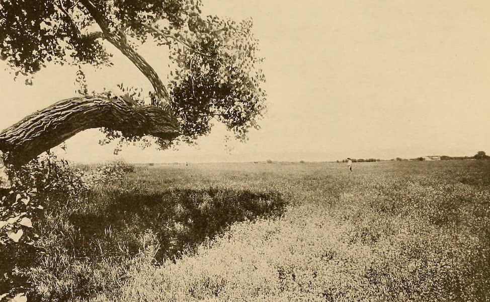 Texas, the Marvellous, the State of the Six Flags - Alfalfa Farm, Near El Paso (1916)
