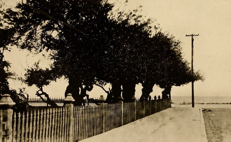 Texas, the Marvellous, the State of the Six Flags - A View in Corpus Christi (1916)