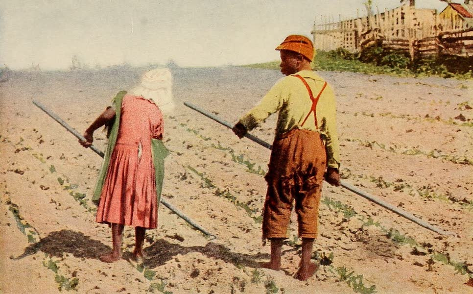 Texas, the Marvellous, the State of the Six Flags - First Hoeing of Cotton (1916)