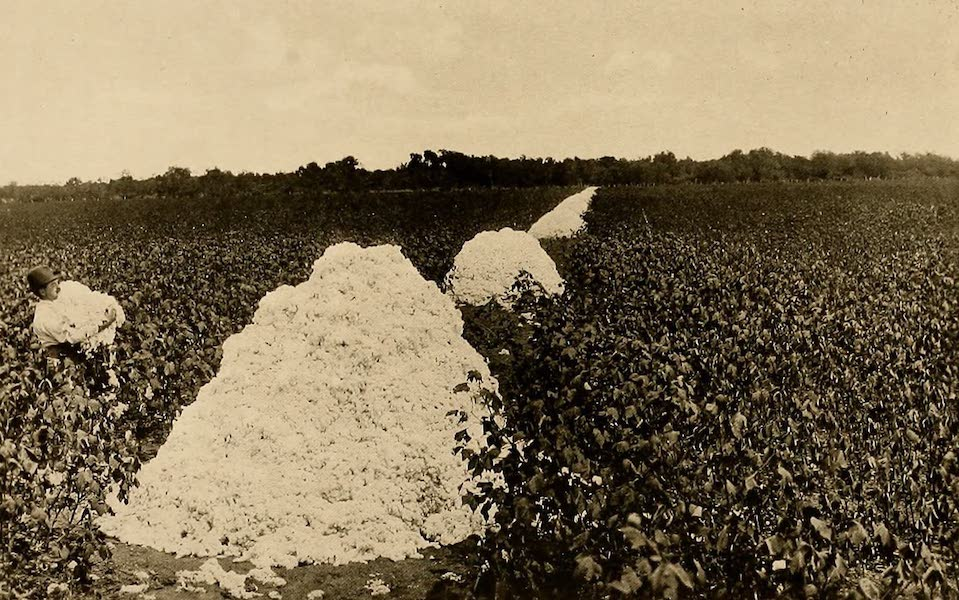 Texas, the Marvellous, the State of the Six Flags - Harvesting the Cotton (1916)