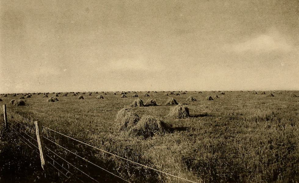 Texas, the Marvellous, the State of the Six Flags - Oats Ready for the Thresher (1916)