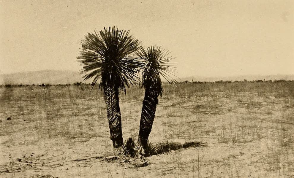 Texas, the Marvellous, the State of the Six Flags - The Spanish Bayonet (1916)