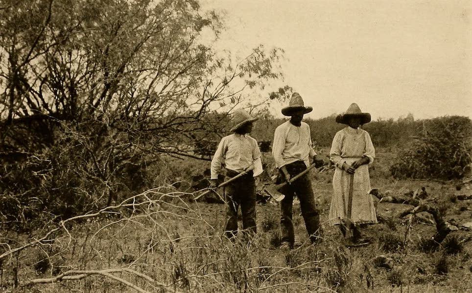 Texas, the Marvellous, the State of the Six Flags - Mexican Refugees Clearing Mesquite (1916)