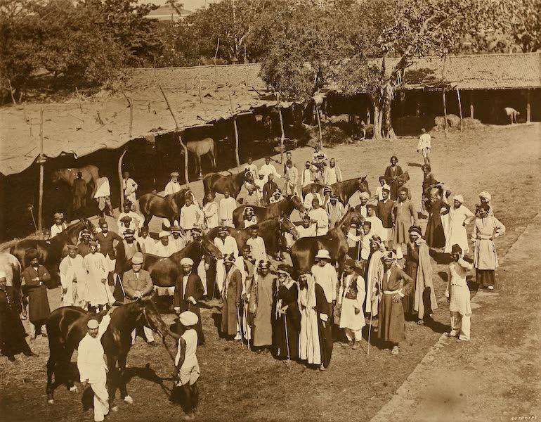 An Arab Horse Mart at Byculla, Bombay
