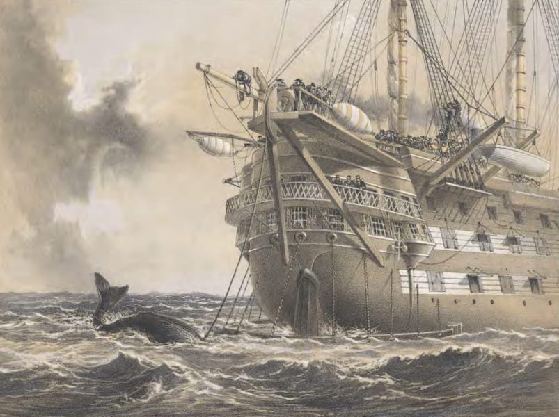 The Atlantic Telegraph - H.M.S. Agamemnon Laying the Atlantic Telegraph Cable in 1858 : A Whale Crosses the Line (1865)