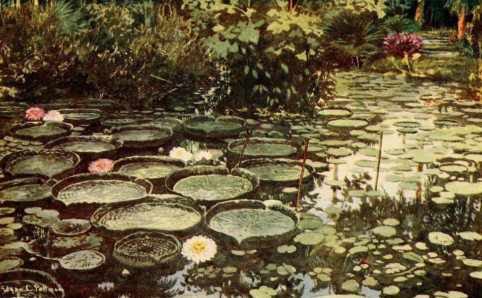 The Beautiful Rio de Janiero - Victoria Regia (1914)