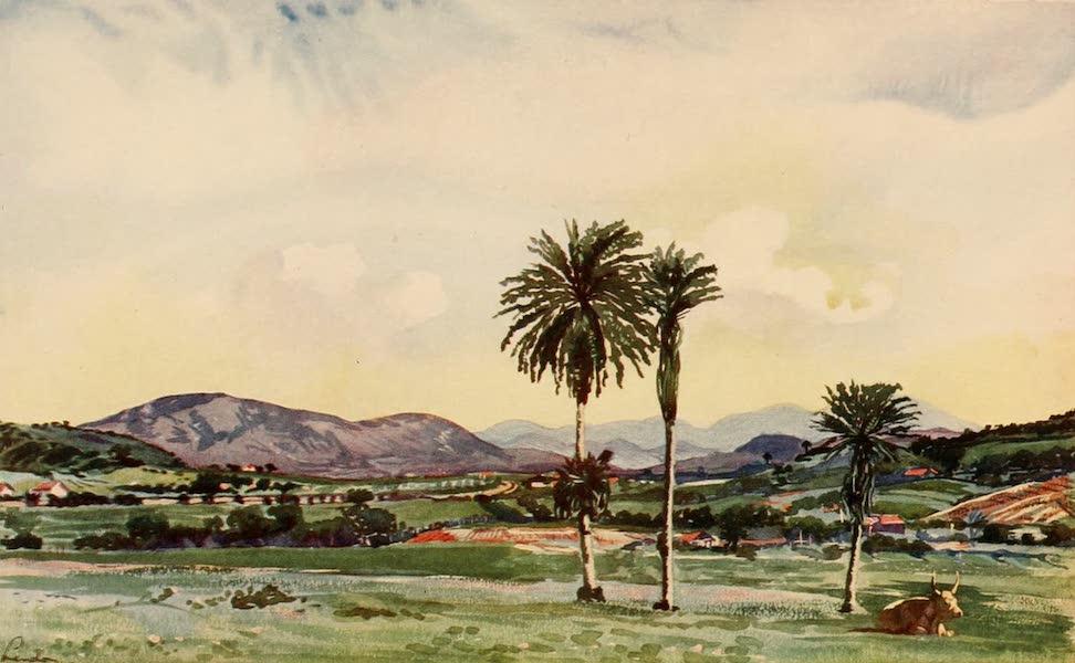 The Beautiful Rio de Janiero - A Bit of Rio's North Western Suburbs (1914)