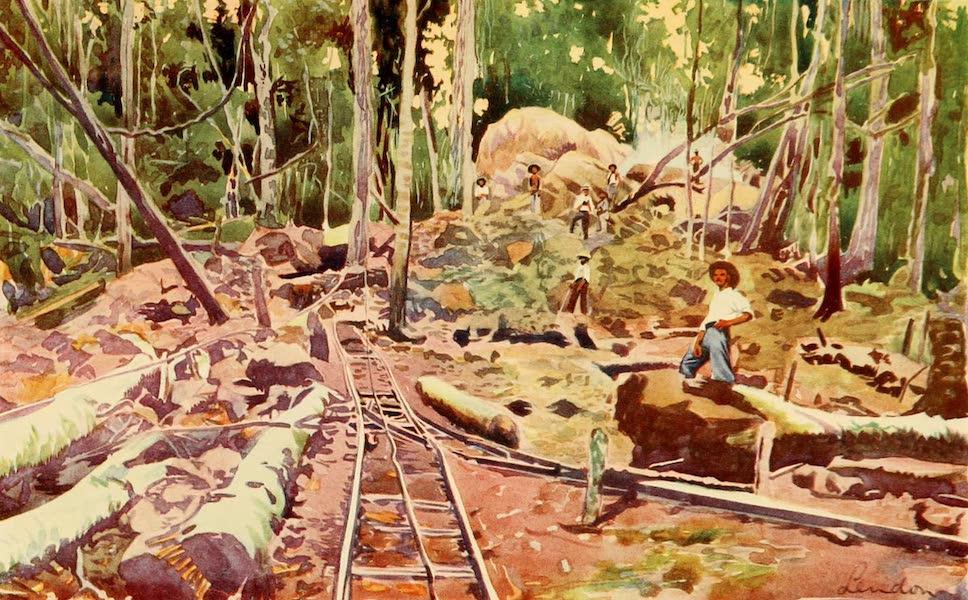 The Beautiful Rio de Janiero - Penetrating the Amazonian Forest (1914)
