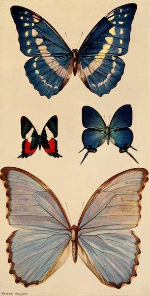 The Beautiful Rio de Janiero - Butterflies (1914)