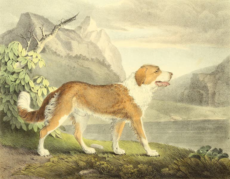 The Cabinet of Natural History & American Rural Sports Vol. 1 - Newfoundland Dog (1830)