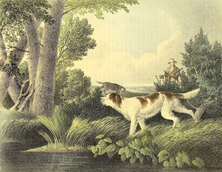 The Cabinet of Natural History & American Rural Sports Vol. 1 - Woodcock Shooting (1830)