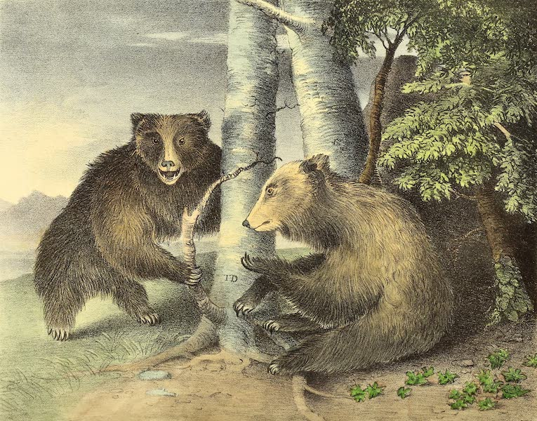 The Cabinet of Natural History & American Rural Sports Vol. 1 - Grizzly Bears (1830)
