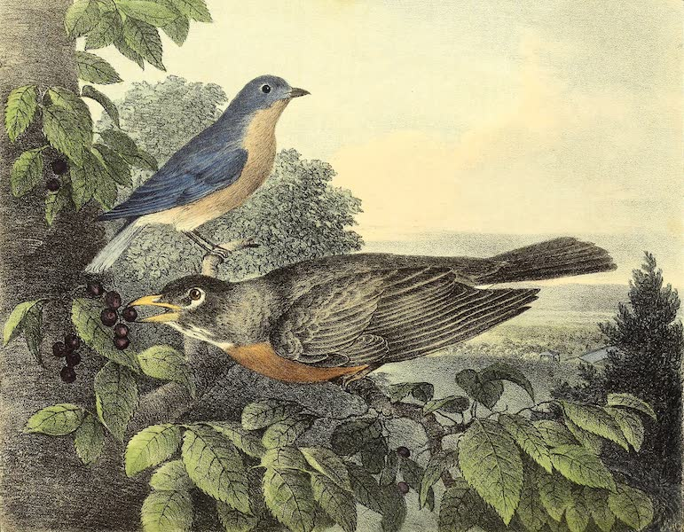 The Cabinet of Natural History & American Rural Sports Vol. 1 - Blue Bird and Robin (1830)