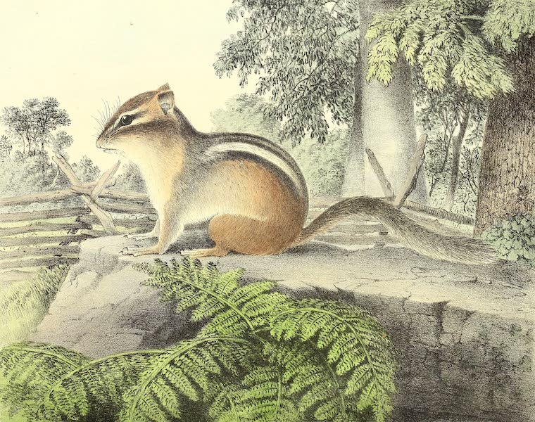 The Cabinet of Natural History & American Rural Sports Vol. 1 - Ground Squirrel (1830)