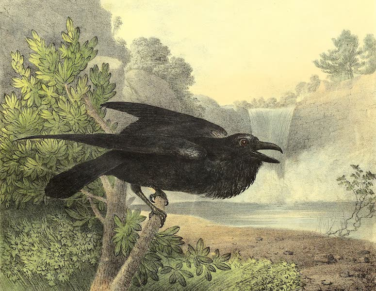 The Cabinet of Natural History & American Rural Sports Vol. 1 - Raven (1830)