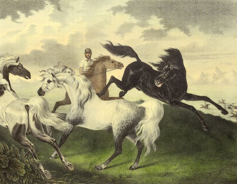 The Cabinet of Natural History & American Rural Sports Vol. 2 - Wild Horses (1832)