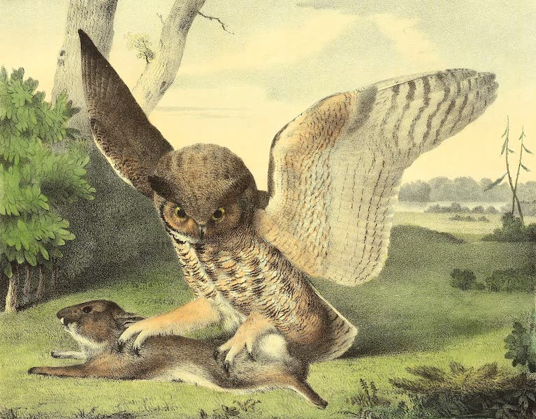 The Cabinet of Natural History & American Rural Sports Vol. 2 - Great Horned Owl (1832)