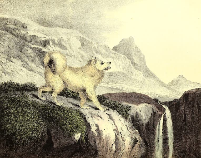 The Cabinet of Natural History & American Rural Sports Vol. 2 - Esquimaux Dog (1832)