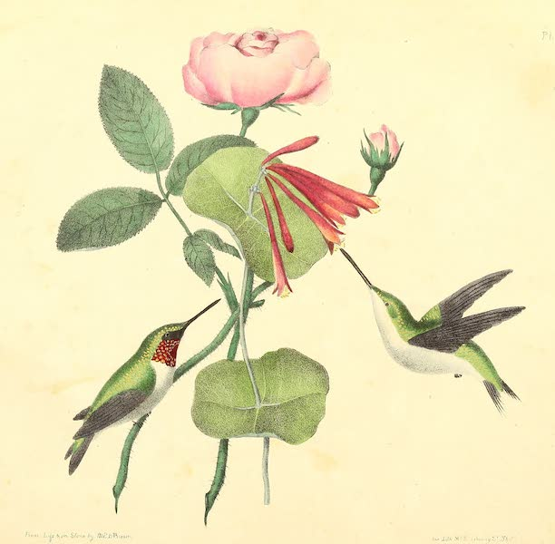 The Cabinet of Natural History & American Rural Sports Vol. 2 - Humming Birds (1832)