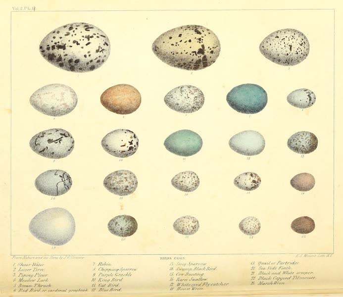 The Cabinet of Natural History & American Rural Sports Vol. 2 - Bird's Eggs (1832)