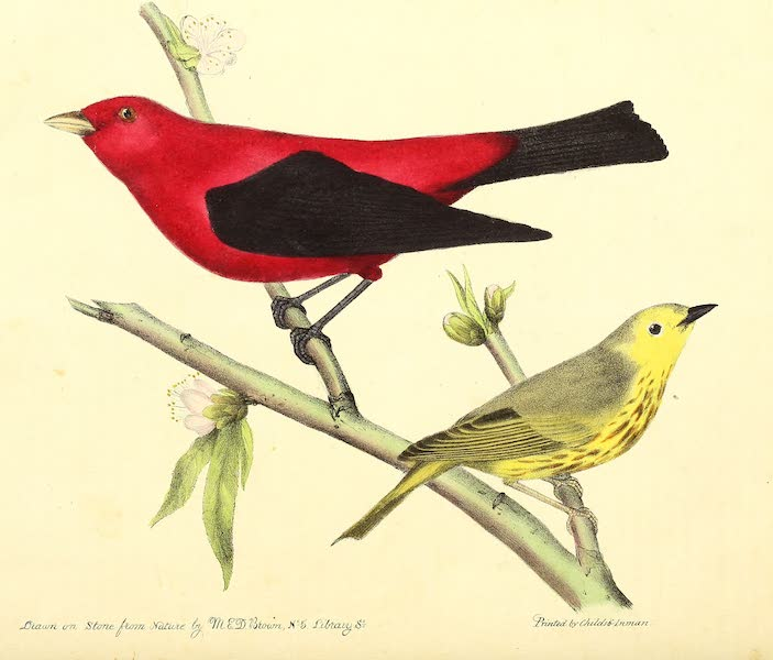 The Cabinet of Natural History & American Rural Sports Vol. 2 - Scarlet Tanager and Blue-Eyed Yellow Warbler (1832)