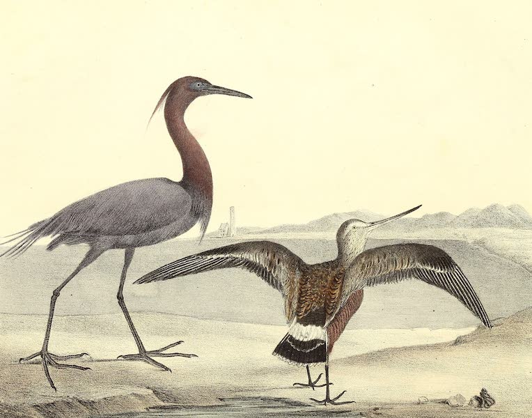 The Cabinet of Natural History & American Rural Sports Vol. 2 - Blue Crane and Hudsonian Godwit (1832)