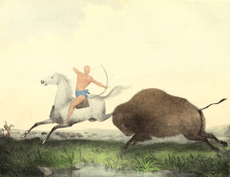 The Cabinet of Natural History & American Rural Sports Vol. 2 - American Buffaloe (1832)
