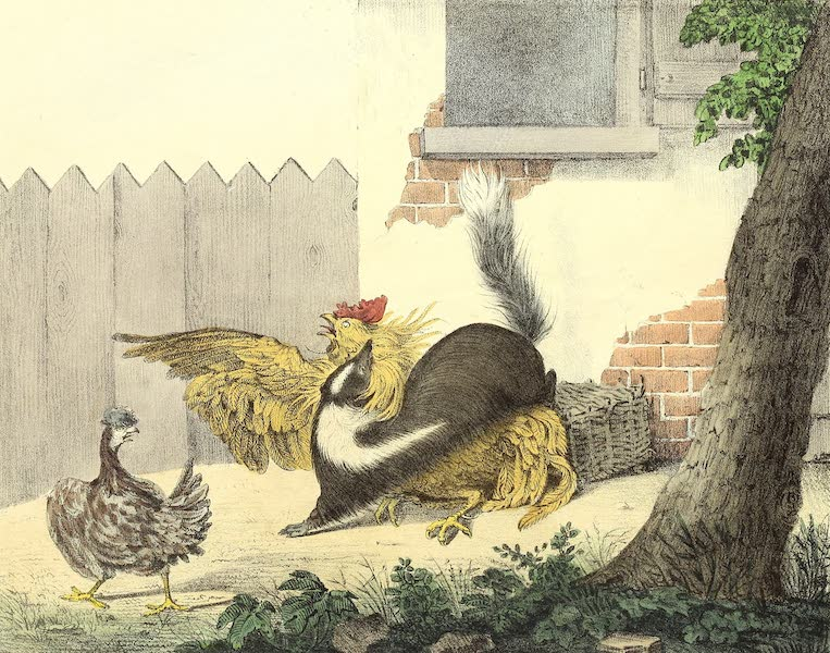 The Cabinet of Natural History & American Rural Sports Vol. 2 - Skunk (1832)