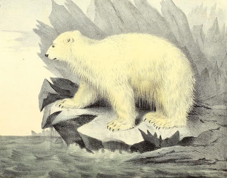 The Cabinet of Natural History & American Rural Sports Vol. 2 - Polar Bear (1832)