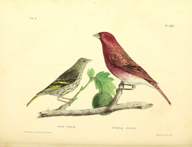 The Cabinet of Natural History & American Rural Sports Vol. 2 - Pine Finch and Purple Finch (1832)
