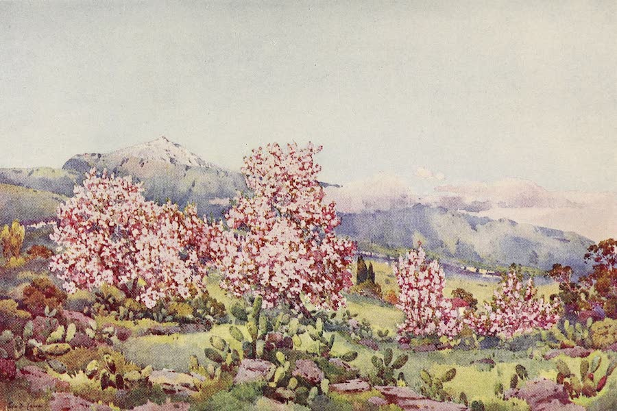 Almond Blossom, Valley of Orotava