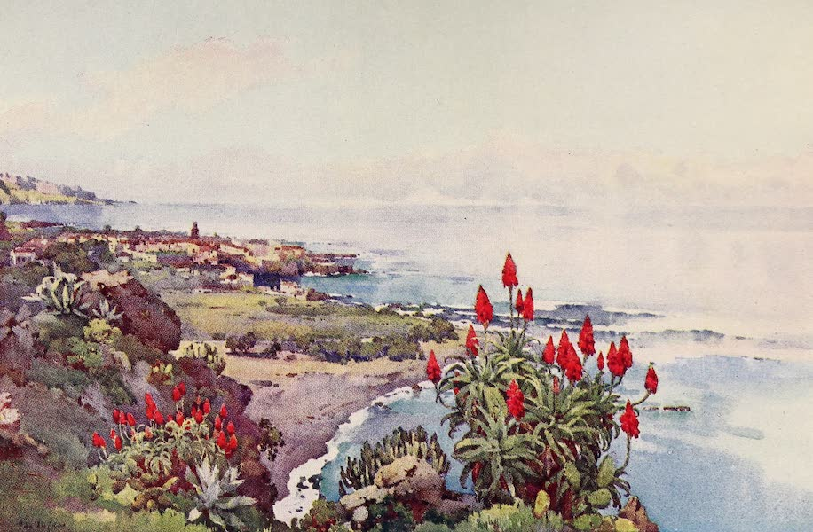 The Canary Islands, Painted and Described - Puerto Orotava (1911)