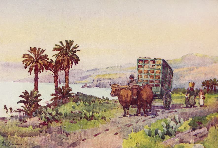 The Canary Islands, Painted and Described - A Banana Cart (1911)