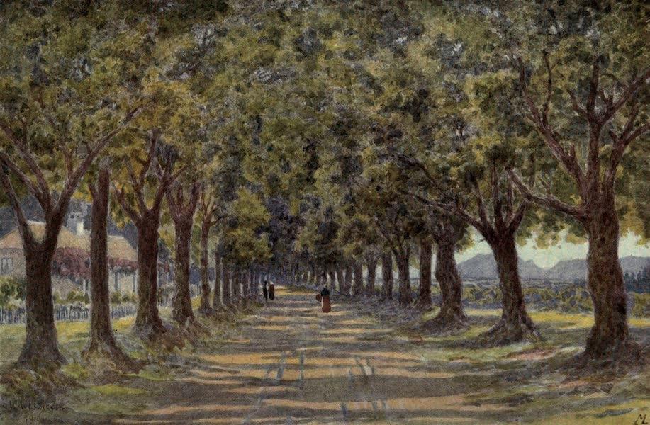 The Cape Peninsula: Pen and Colour Sketches - Oak Avenue, Newlands (1910)