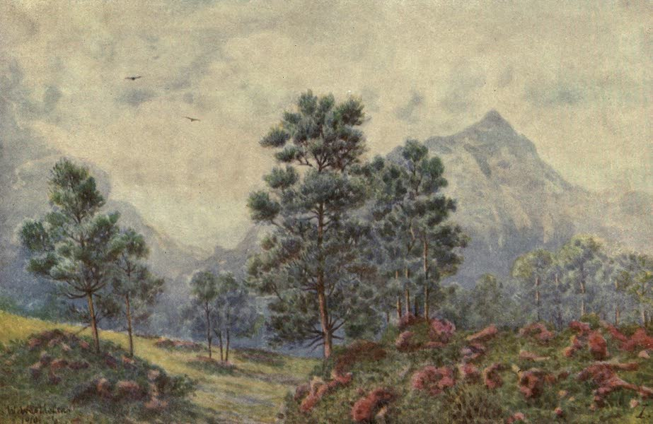 The Cape Peninsula: Pen and Colour Sketches - Silver Trees and Wild Geraniums (1910)