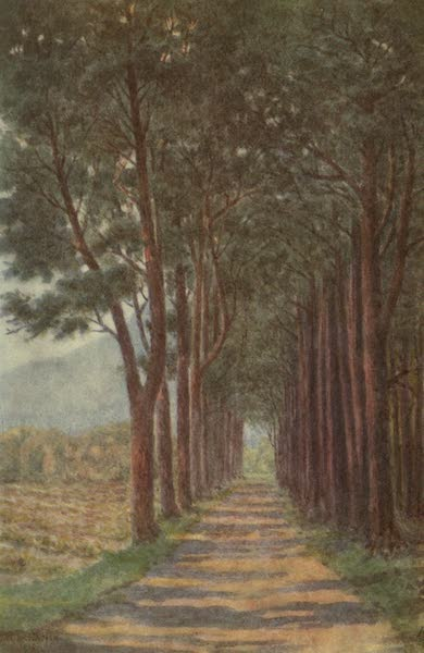 The Cape Peninsula: Pen and Colour Sketches - Fir Avenue - 'Alphen' (1910)