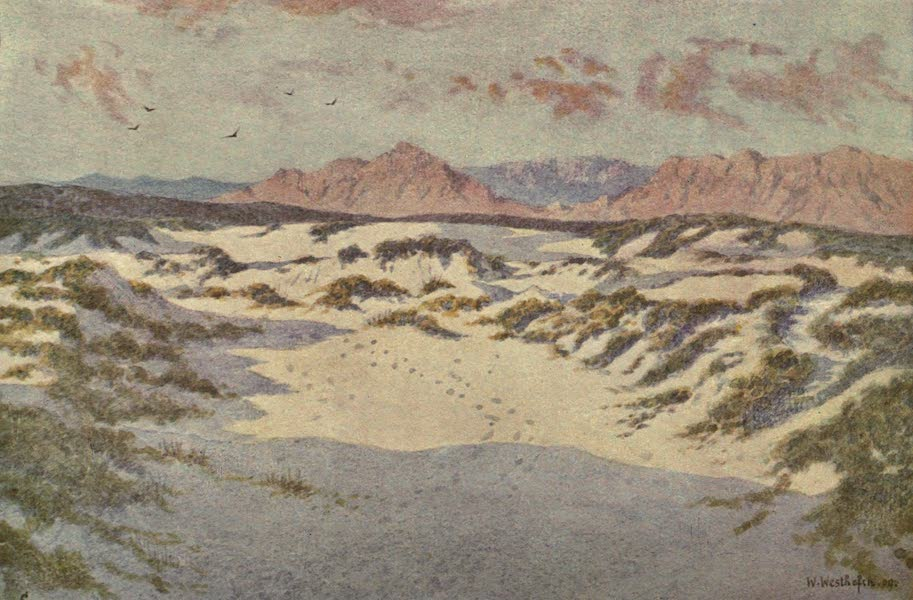 The Cape Peninsula: Pen and Colour Sketches - On the Sandhills near Muizenberg (1910)