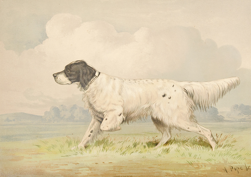 The Celebrated Dogs of America - [Dog No. 2] (1879)