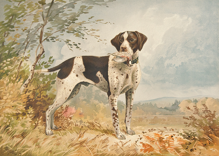 The Celebrated Dogs of America - [Dog No. 3] (1879)