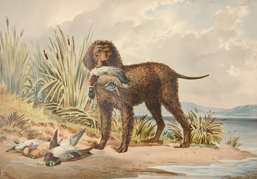 The Celebrated Dogs of America - [Dog No. 4] (1879)