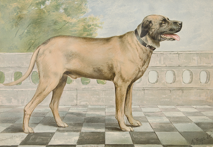 The Celebrated Dogs of America - [Dog No. 5] (1879)